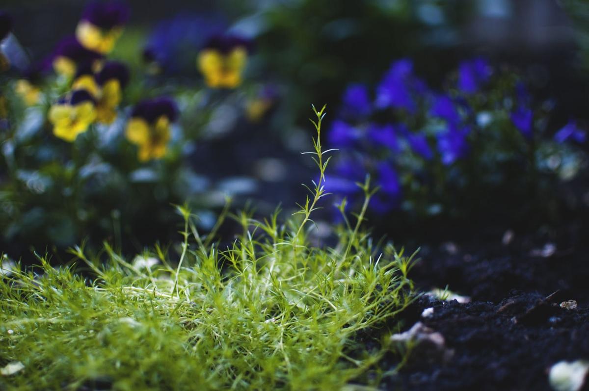 garden magic 7 (1200x797).jpg