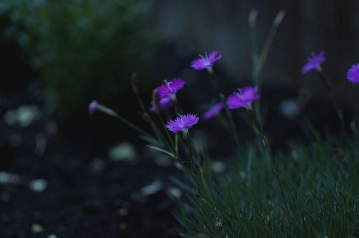 garden magic 6 (1200x797).jpg