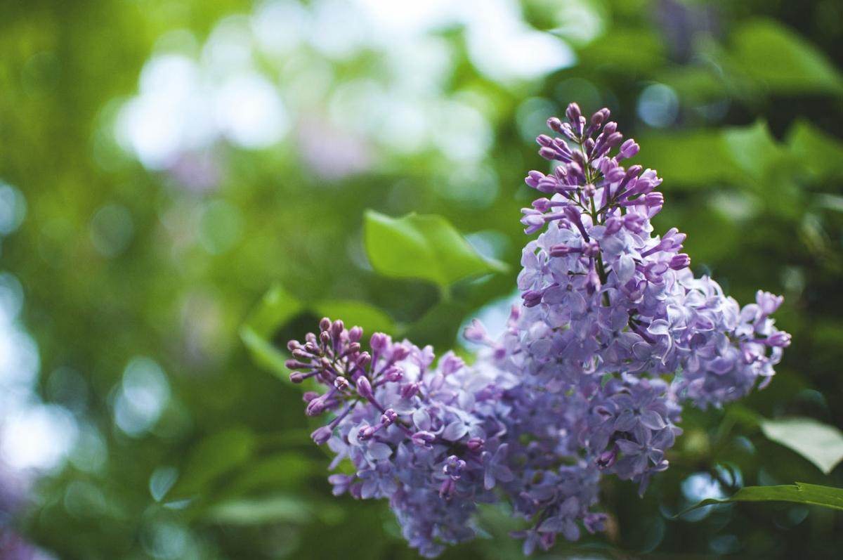 garden magic 4 (1200x797).jpg