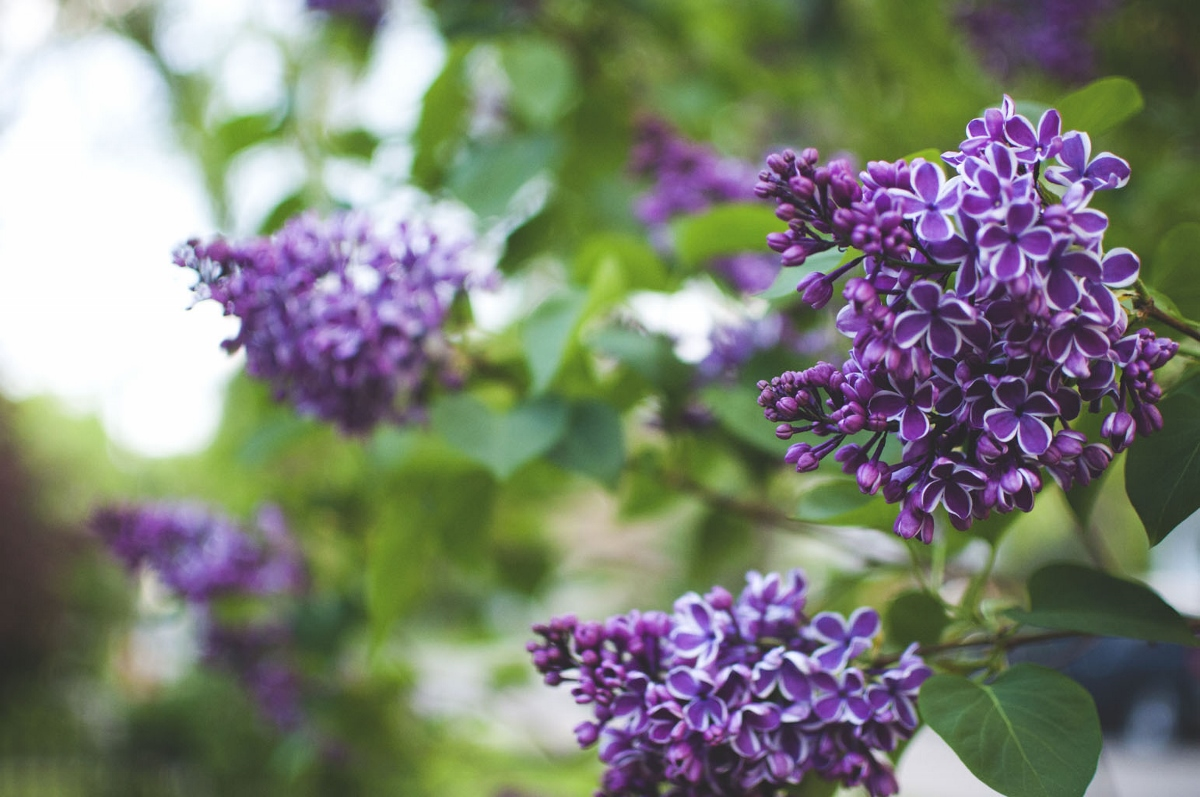 garden magic 2 (1200x797).jpg
