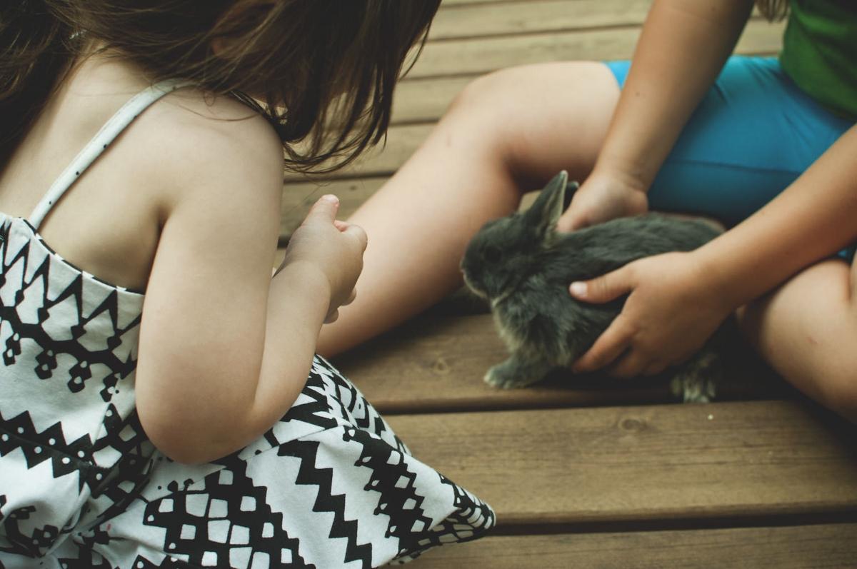 meeting bunny 3 (1200x797).jpg