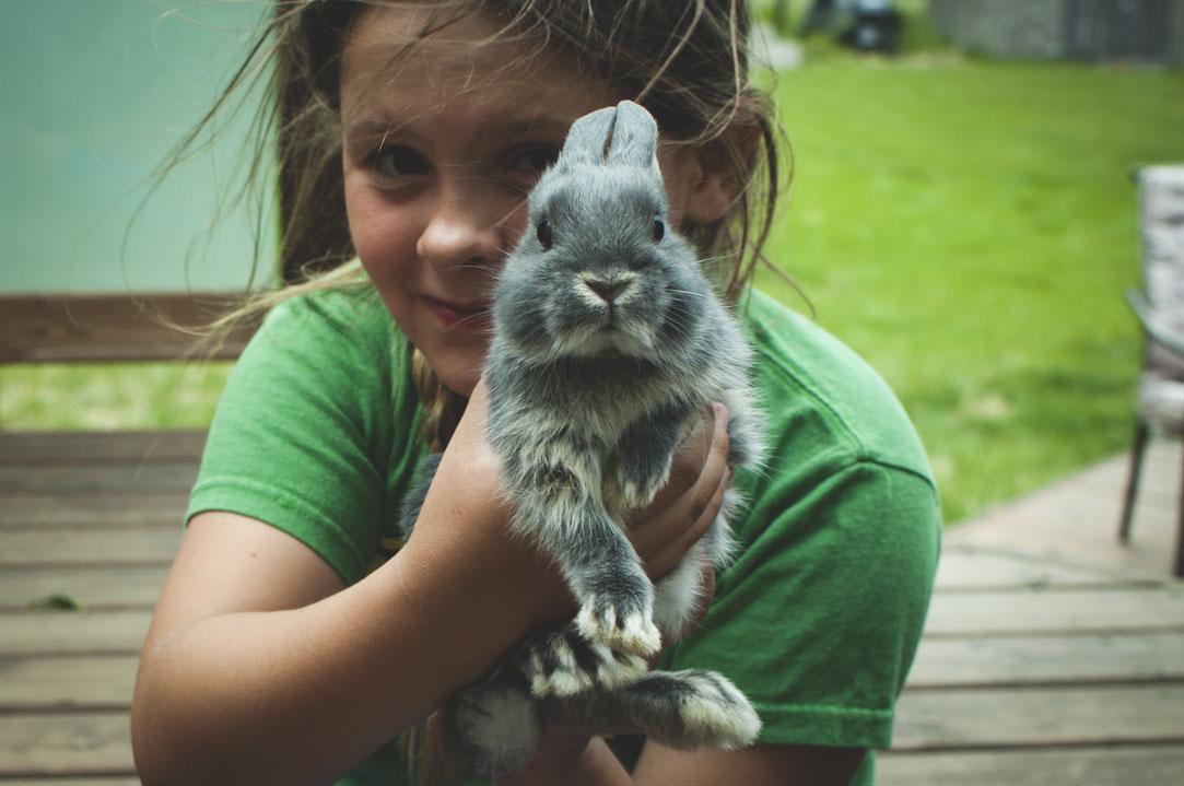 meeting bunny 2 (1083x719).jpg