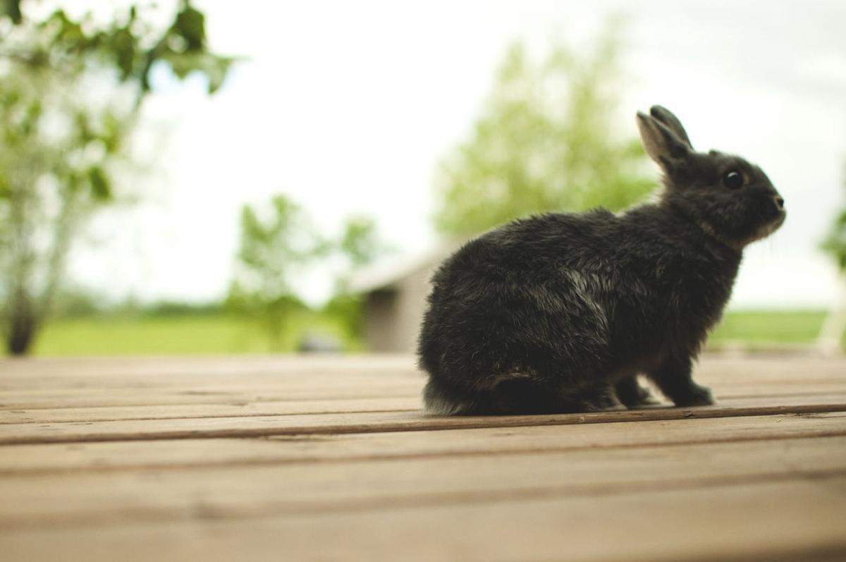 meeting bunny 1 (1200x797).jpg