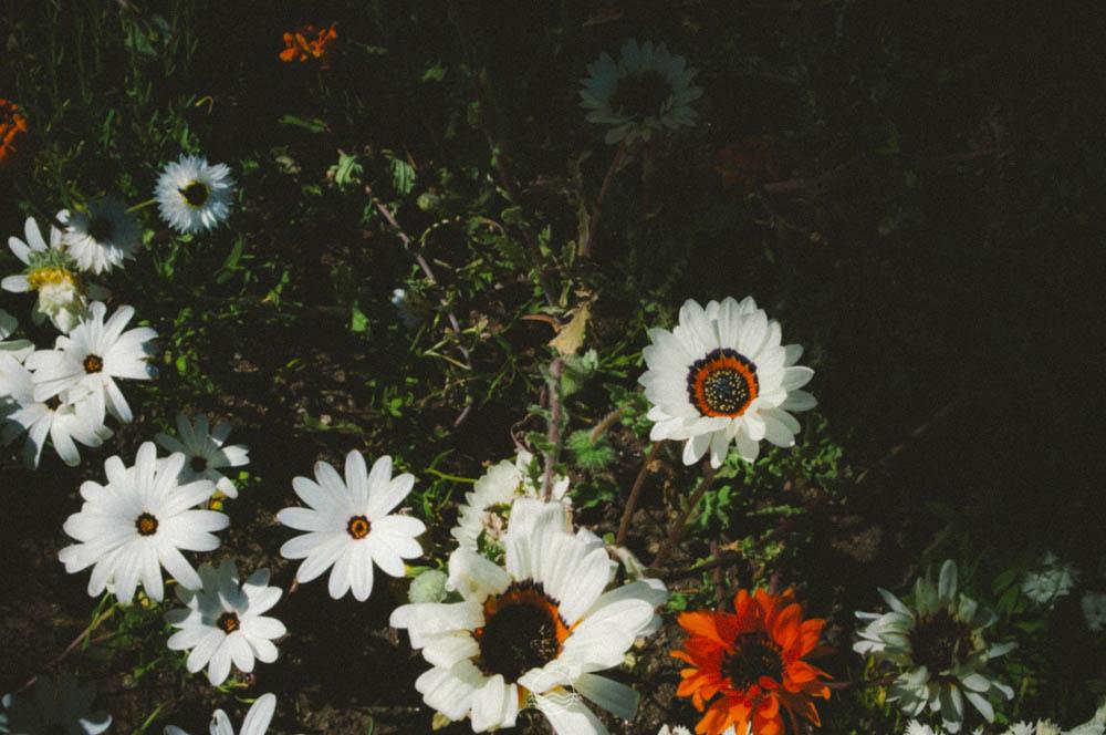 banff Cascade gardens lune vintage blog-10.jpg