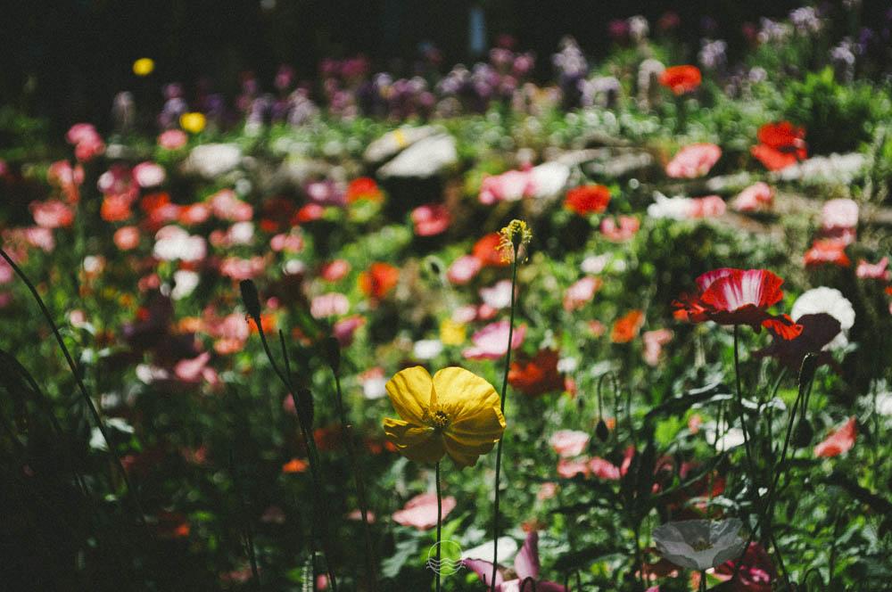 banff Cascade gardens lune vintage blog-6.jpg
