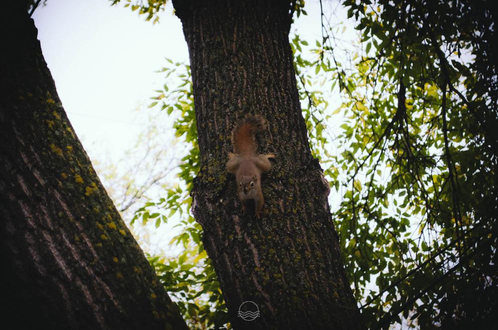 fall manitoba squirrel lune blog-6.jpg