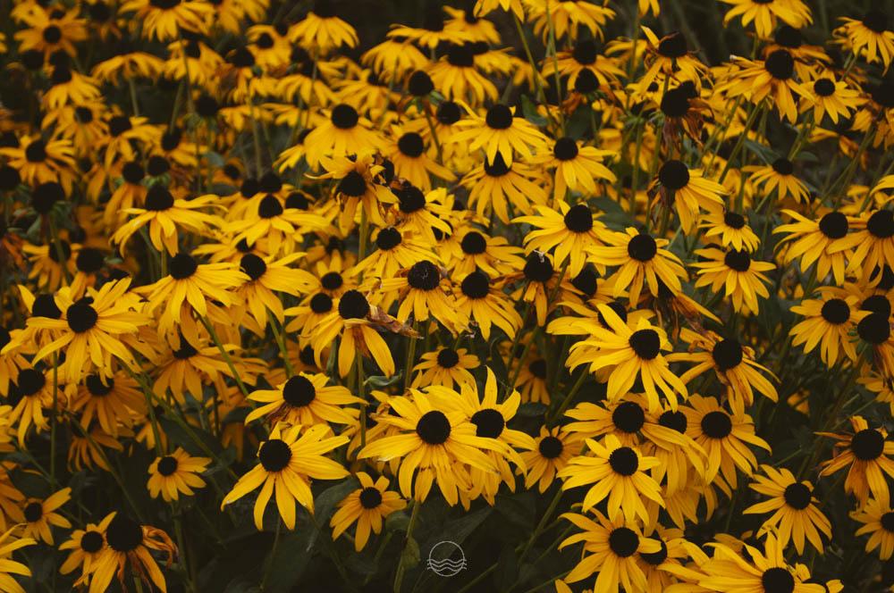fall at the forks winnipeg lune blog-10.jpg