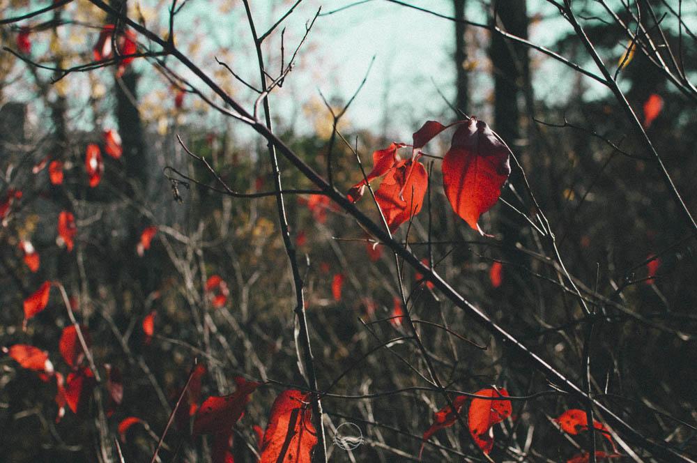 thanksgiving 2013 lune blog-35.jpg