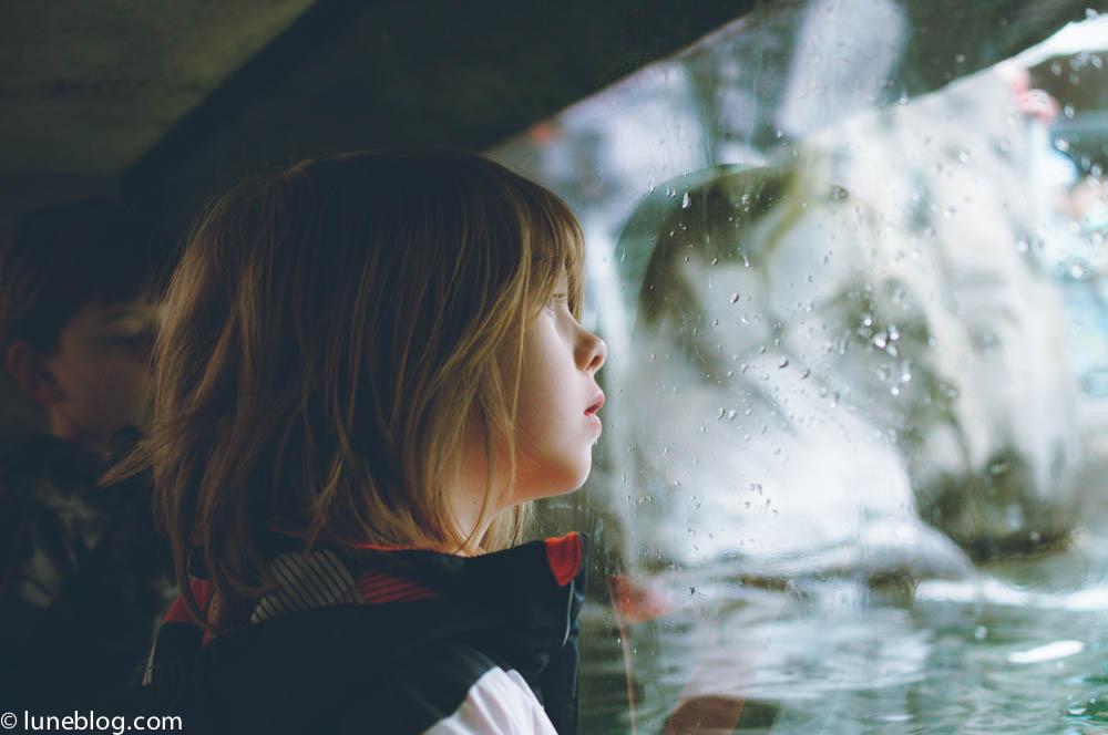 vancouver aquarium lune blog (9 of 50).jpg