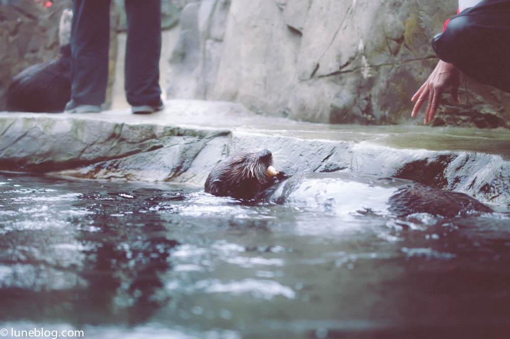 vancouver aquarium lune blog (10 of 50).jpg