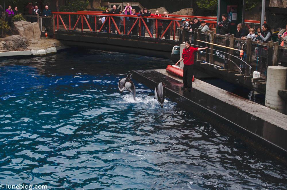vancouver aquarium lune blog (5 of 50).jpg