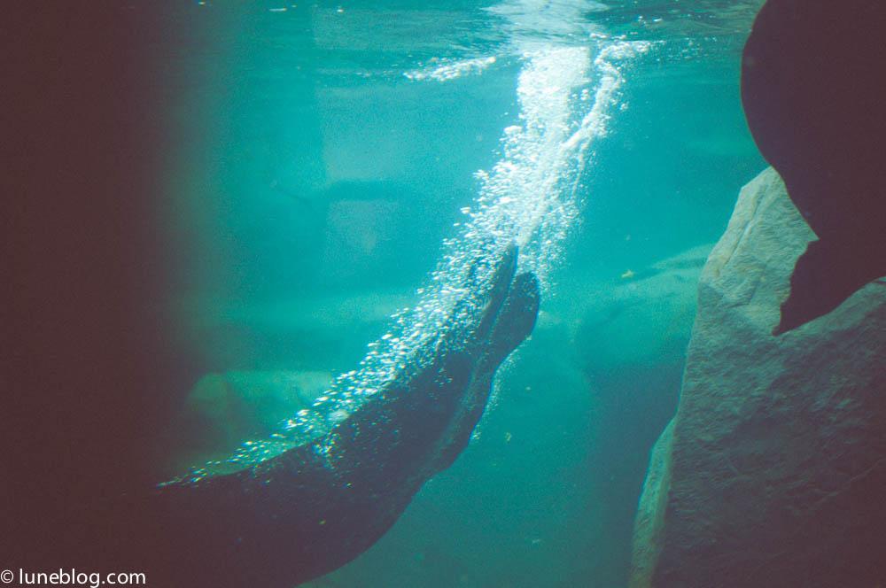 vancouver aquarium lune blog (11 of 50).jpg