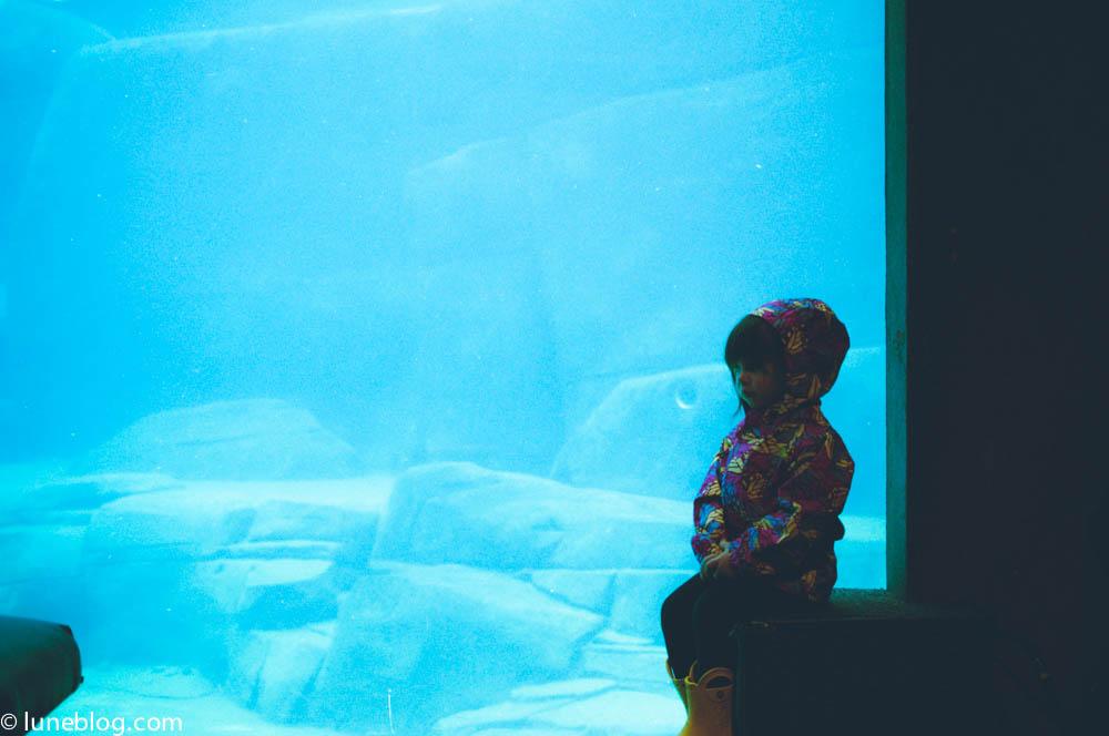 vancouver aquarium lune blog (20 of 50).jpg