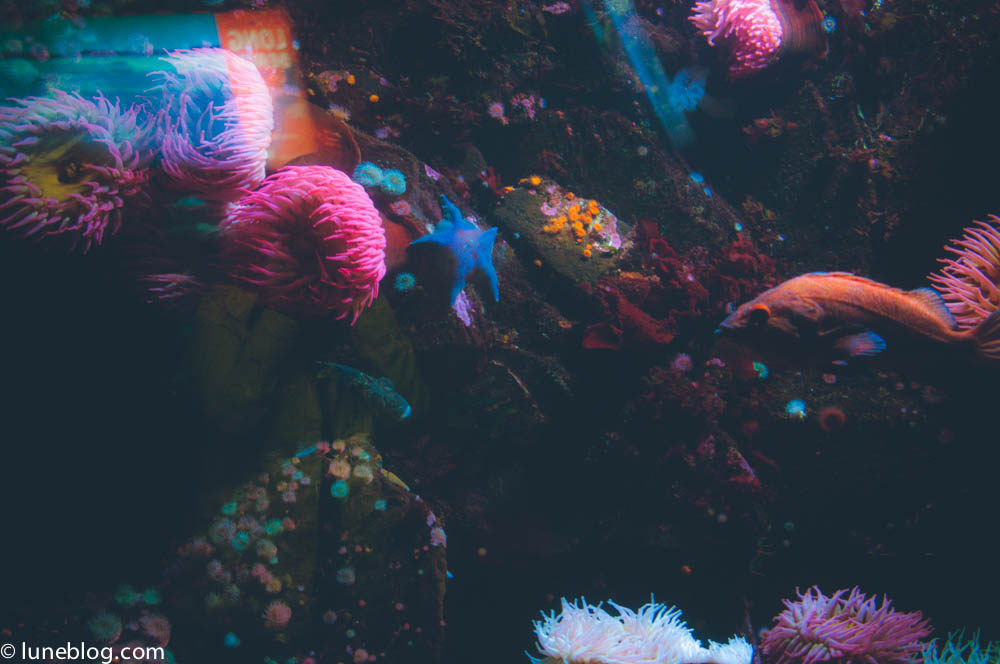 vancouver aquarium lune blog (43 of 50).jpg
