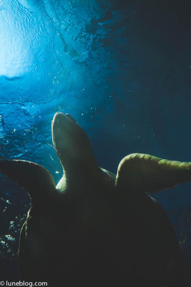 vancouver aquarium lune blog (39 of 50).jpg
