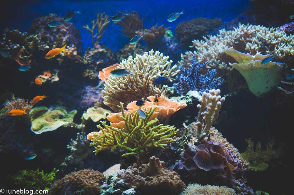 vancouver aquarium lune blog (38 of 50).jpg