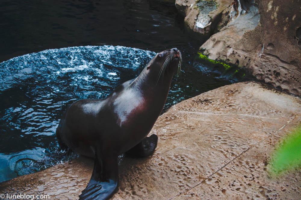 vancouver aquarium lune blog (50 of 50).jpg
