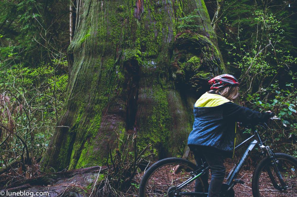 vancouver stanley park sea wall bike ride lune blog (21 of 26).jpg