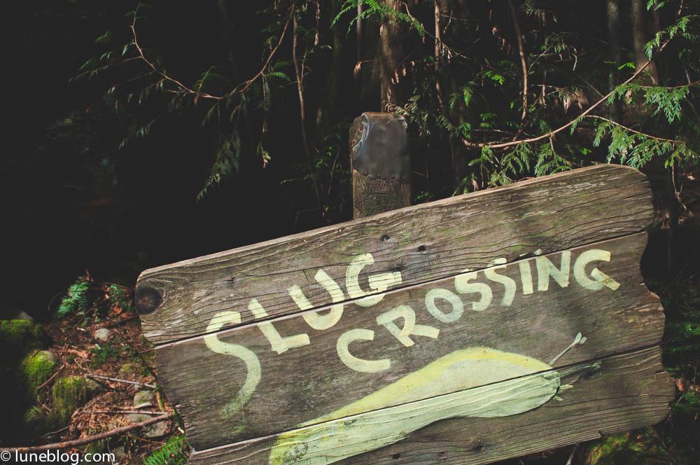 capilano suspension bridge vancouver lune blog (19 of 39).jpg