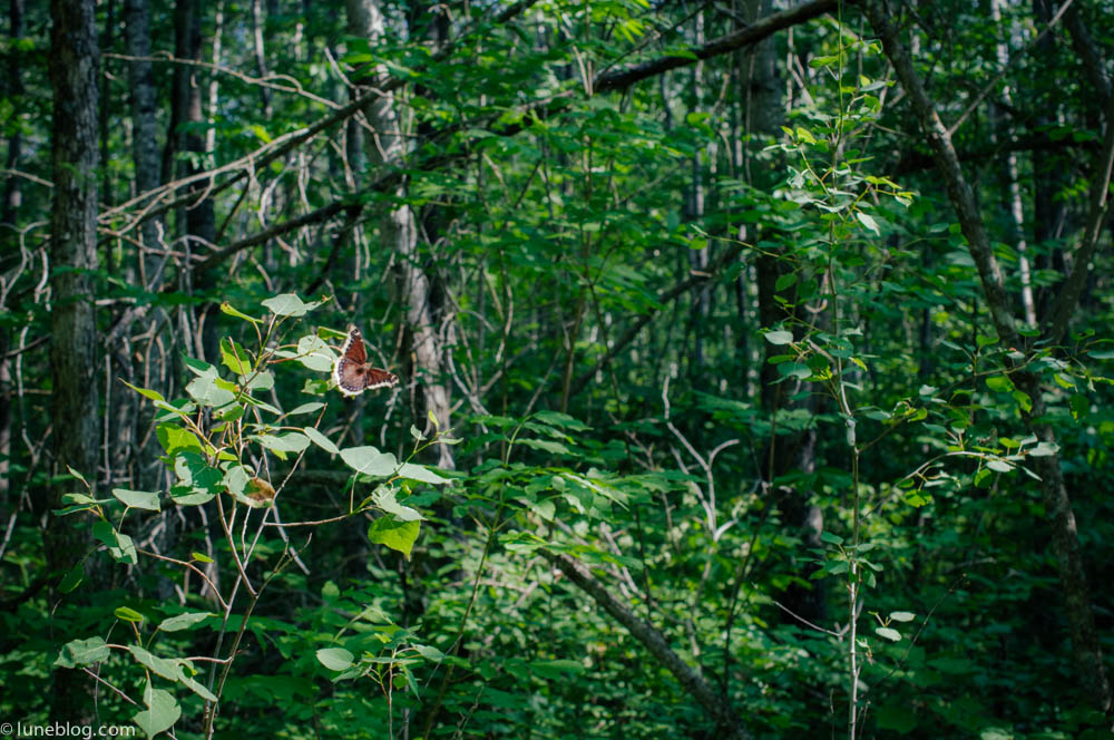 nutimik campground whiteshell manitoba canada lune blog (19 of 33).jpg