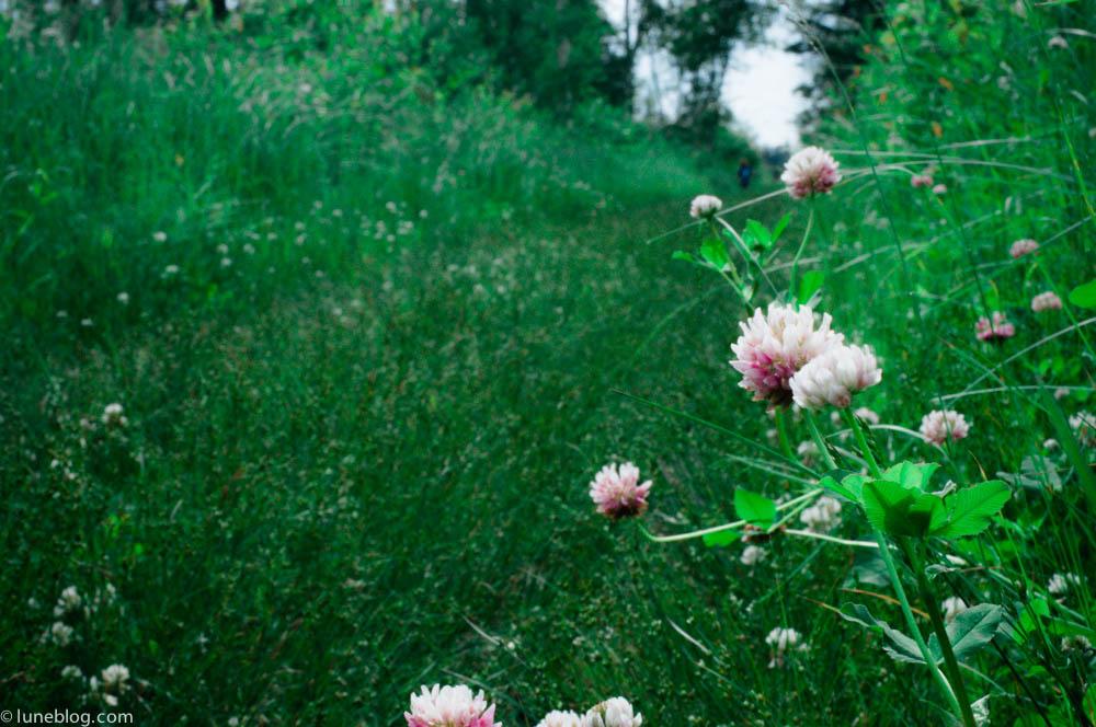 nutimik campground whiteshell manitoba canada lune blog (15 of 33).jpg