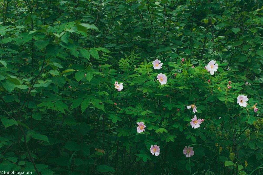 nutimik campground whiteshell manitoba canada lune blog (5 of 33).jpg