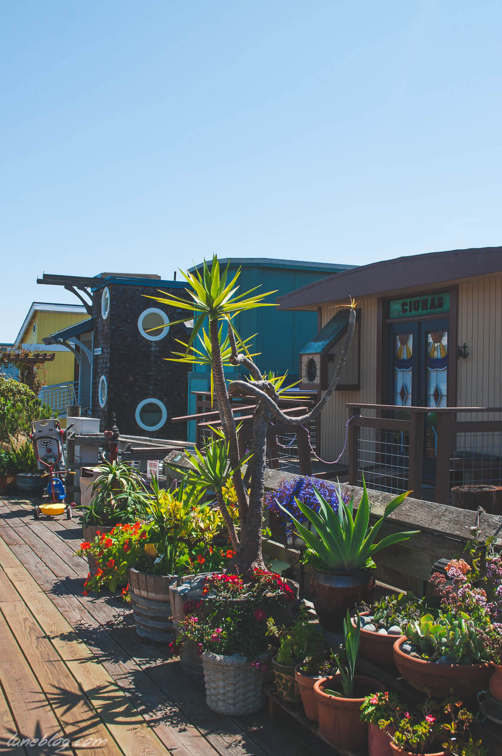 houseboats of sausalito sanfransisco lune travels blog (19 of 31).jpg