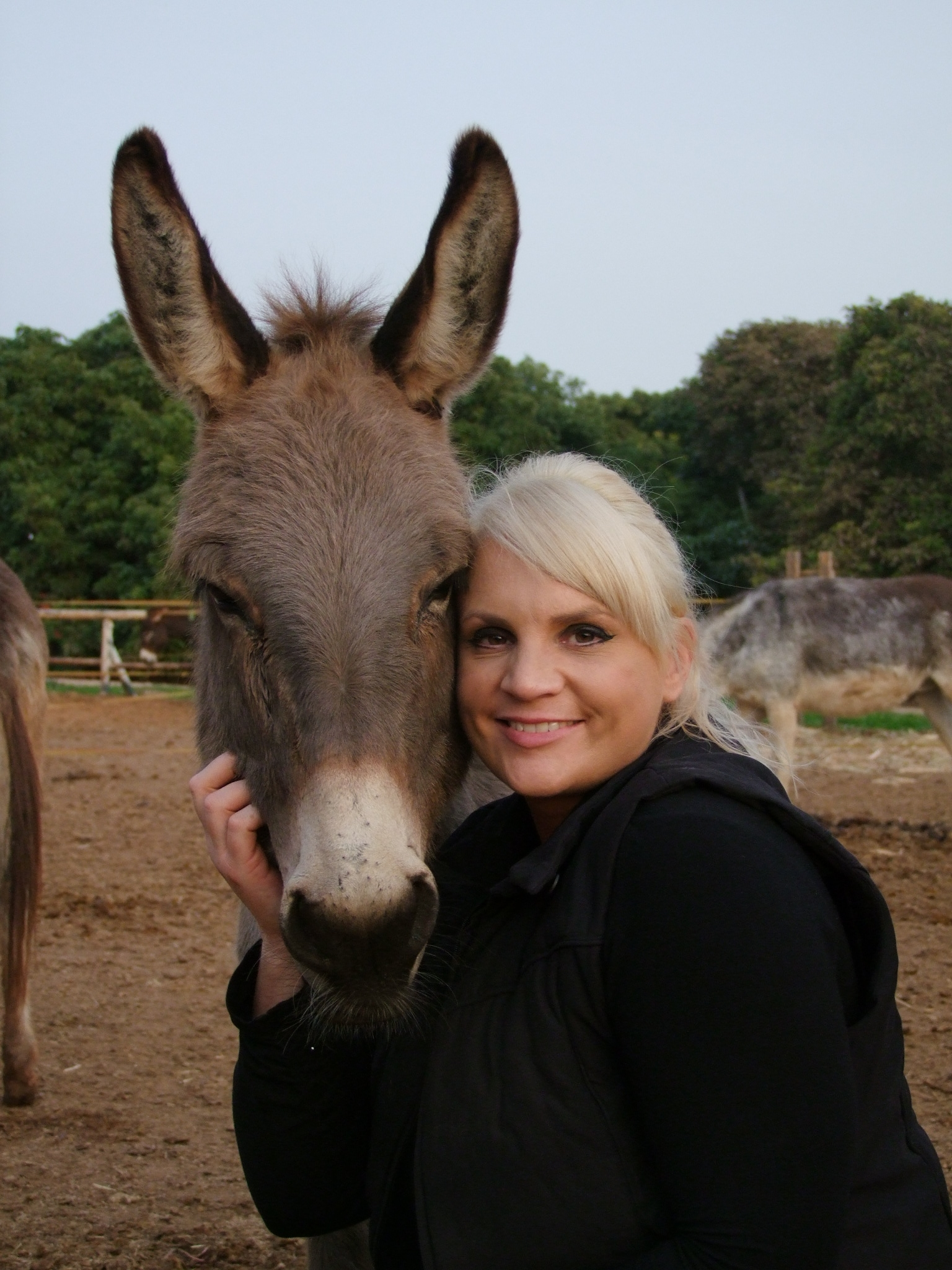 Click photo to download. Caption: Lucy Fensom, a former British stewardess, opened a donkey sanctuary that tends to equines located mostly in the West Bank. Credit: Tova Saul.