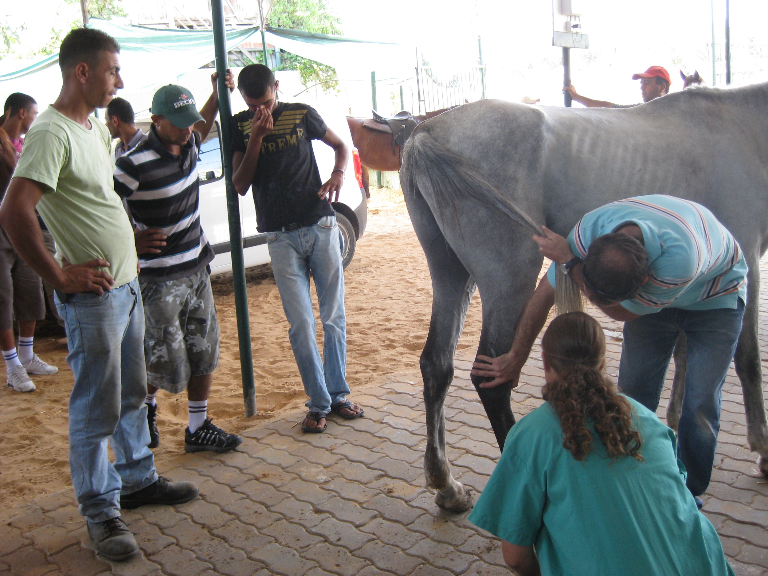 Click photo to download. Caption: Workers at the SHADH clinic tend to a starved horse. Credit: Tova Saul.