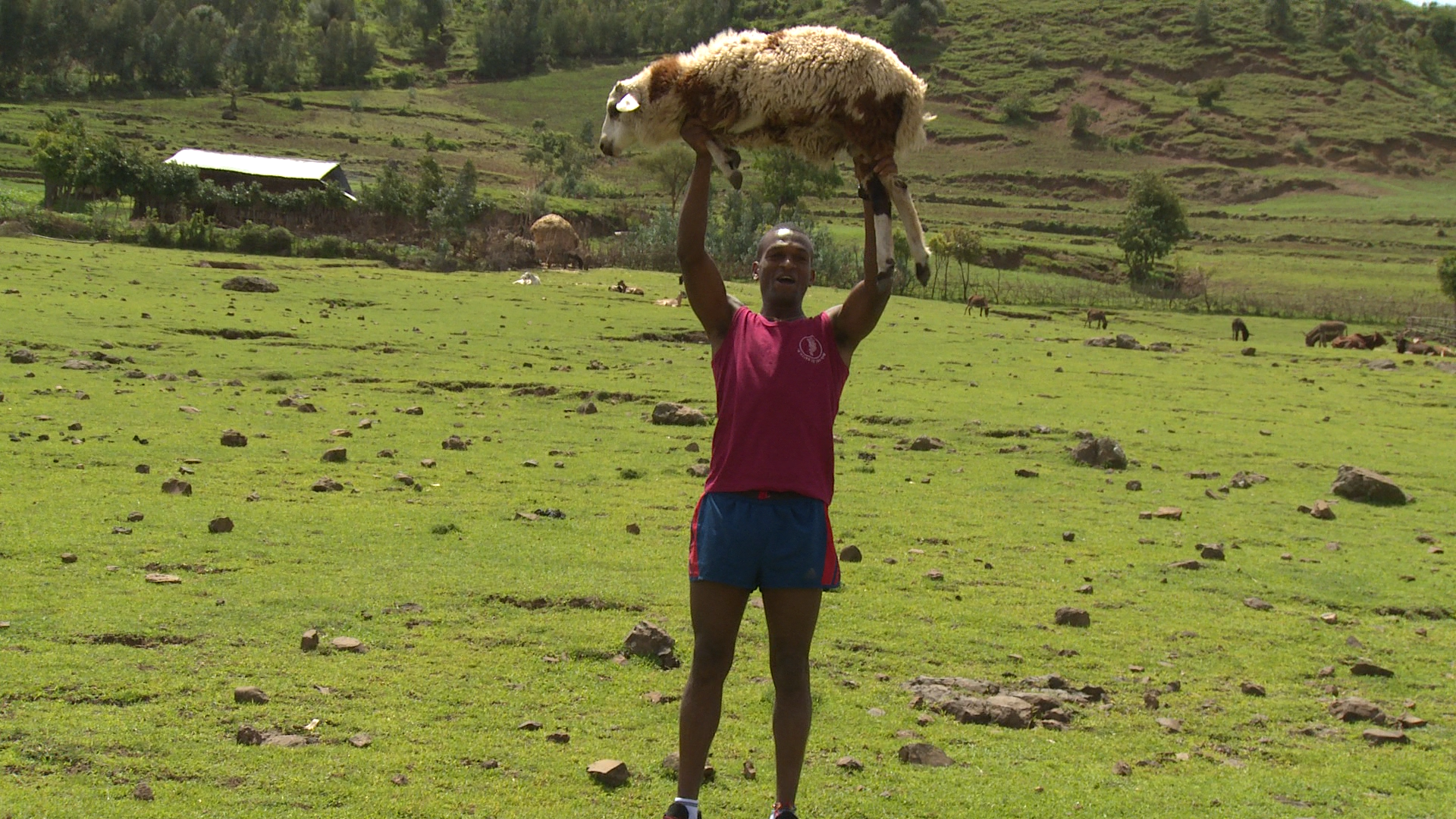 Click photo to download. Caption: Mekonen Abebe triumphantly lifts a sheep above his head in his Ethiopian hometown. Credit: Jerusalem U.