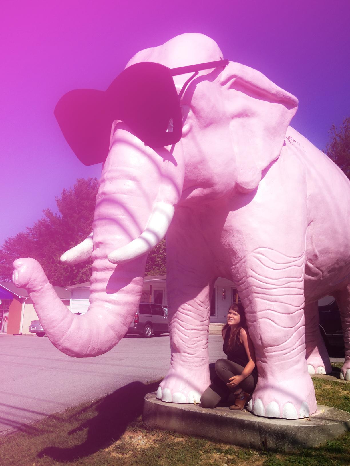 pink elephant 1.1.jpg