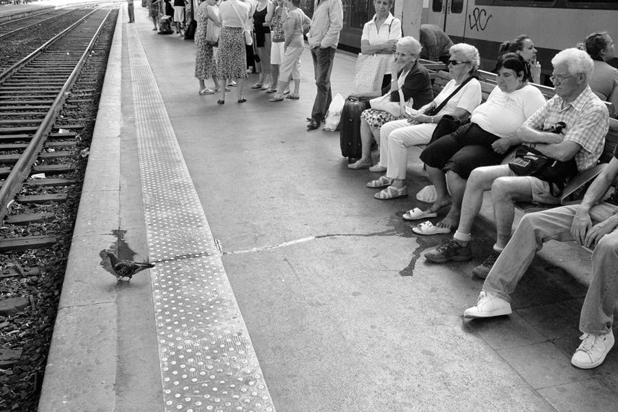 Pigeon spill