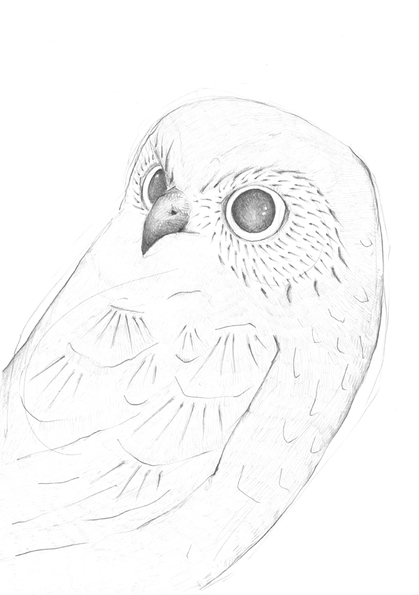 LouiseJennison_A5bird01.jpg