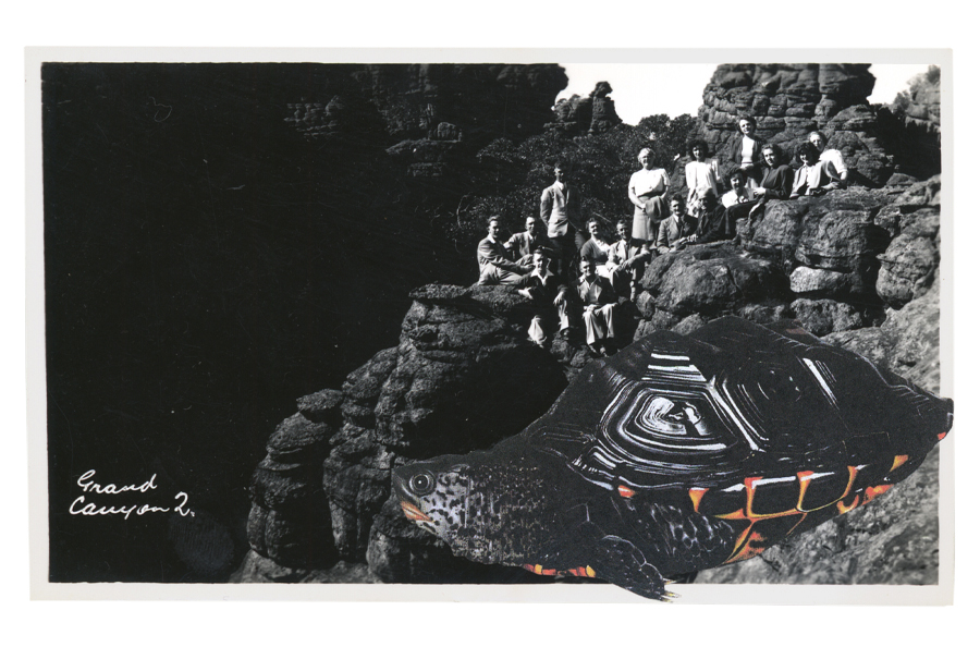 Gracia Haby,  A whole new kind of formation , 2012, postcard collage