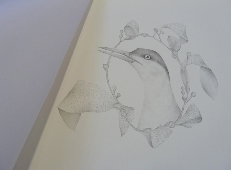 An Antarctic Tern ( Sterna vittata ) surrounded by a ring of kelp, from the artists' book,  A Year of Southern Hemisphere Birds , 2013, by Louise Jennison