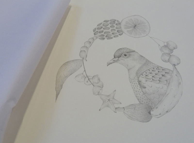 Louise Jennison, Superb Fruit-Dove (detail), from the artists' book  A Year of Southern Hemisphere Birds