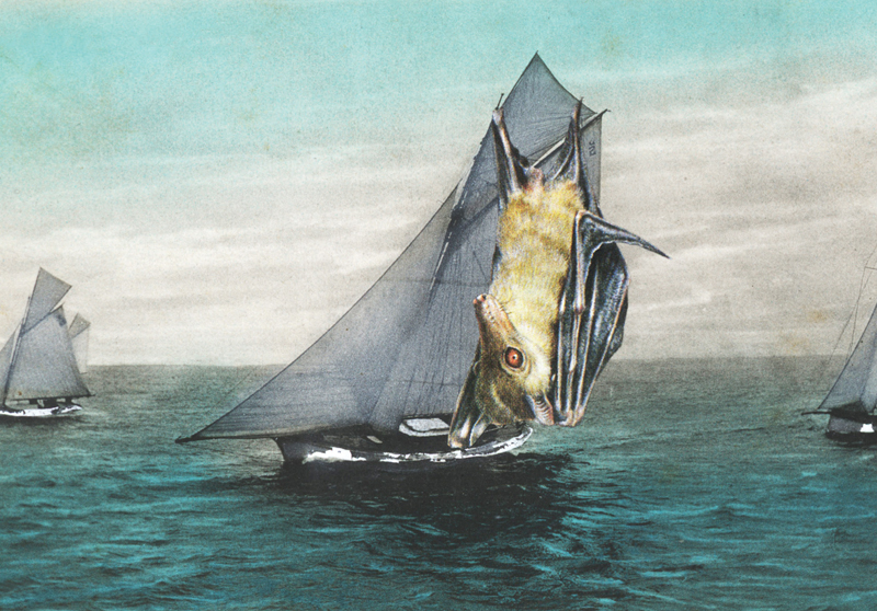 New greeting card featuring the collage  It had to be said, when it came to yachting, the Dog bat provided sails like no other