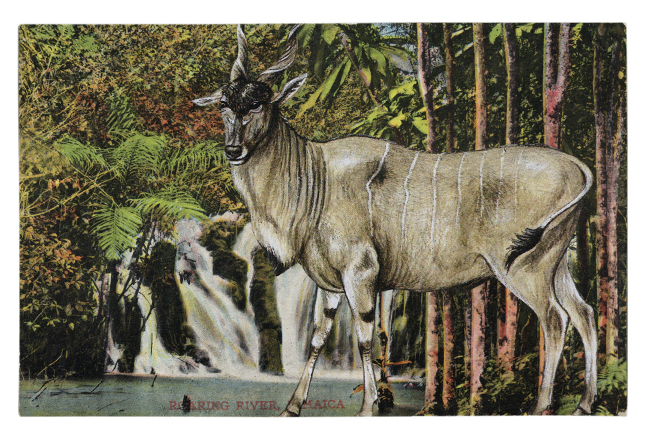 Gracia Haby,  By the Roaring River of Jamaica, I lost my legs to nature , 2013, postcard collage