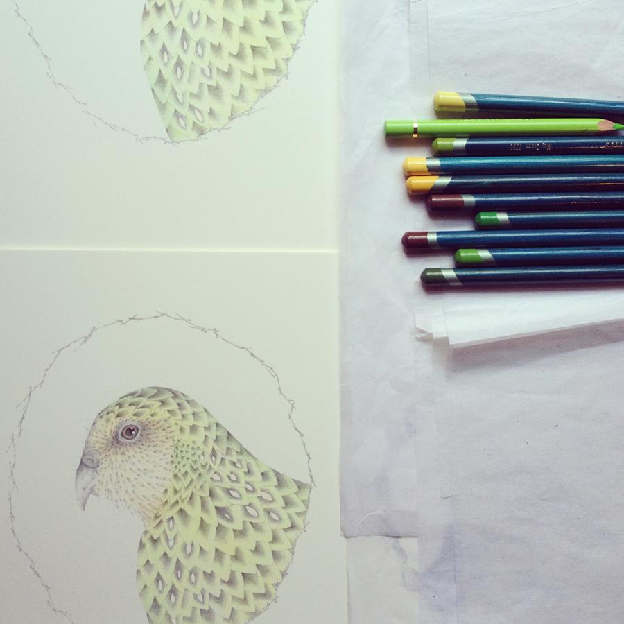 Kakapo ( Strigops habroptilus ) in progress, from the artists' book  A Flight of Twelve Southern Hemisphere Birds , 2013