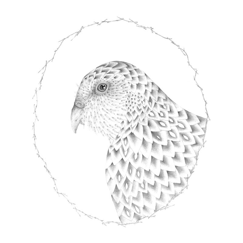 louisejennison_kakapo.jpg