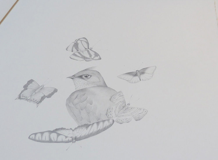 gracialouise_birds30.jpg