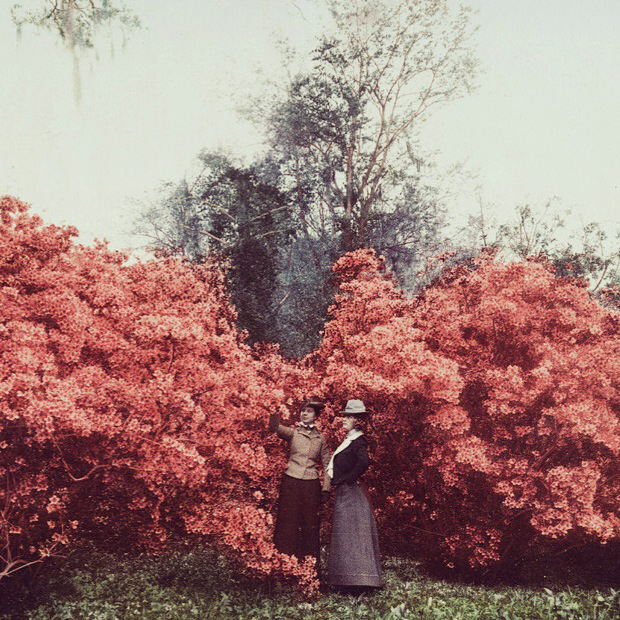 Navigating our way through the MIFF 2014 guide is akin to this  (Image credit: The Glory of Azaleas, Magnolia-on-the-Ashley, S. C., c. 1901, Detroit Photographic Co. photochrome, Beineke Rare Book Library)