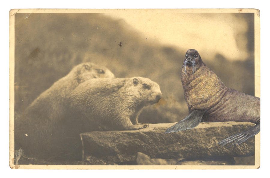 Gracia Haby,  The staccato surmises of the Marmots caused bafflement,  2014, postcard collage