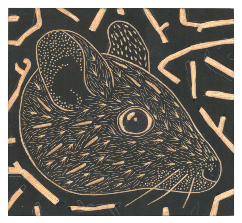 Louise Jennison, Greater stick-nest rat ( Leporillus conditor ), 2015, lemonwood engraving in progress