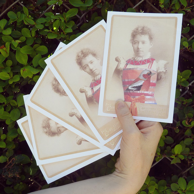 A fan of new cards , available at  Milly Sleeping  in  Carlton  and through  our online store