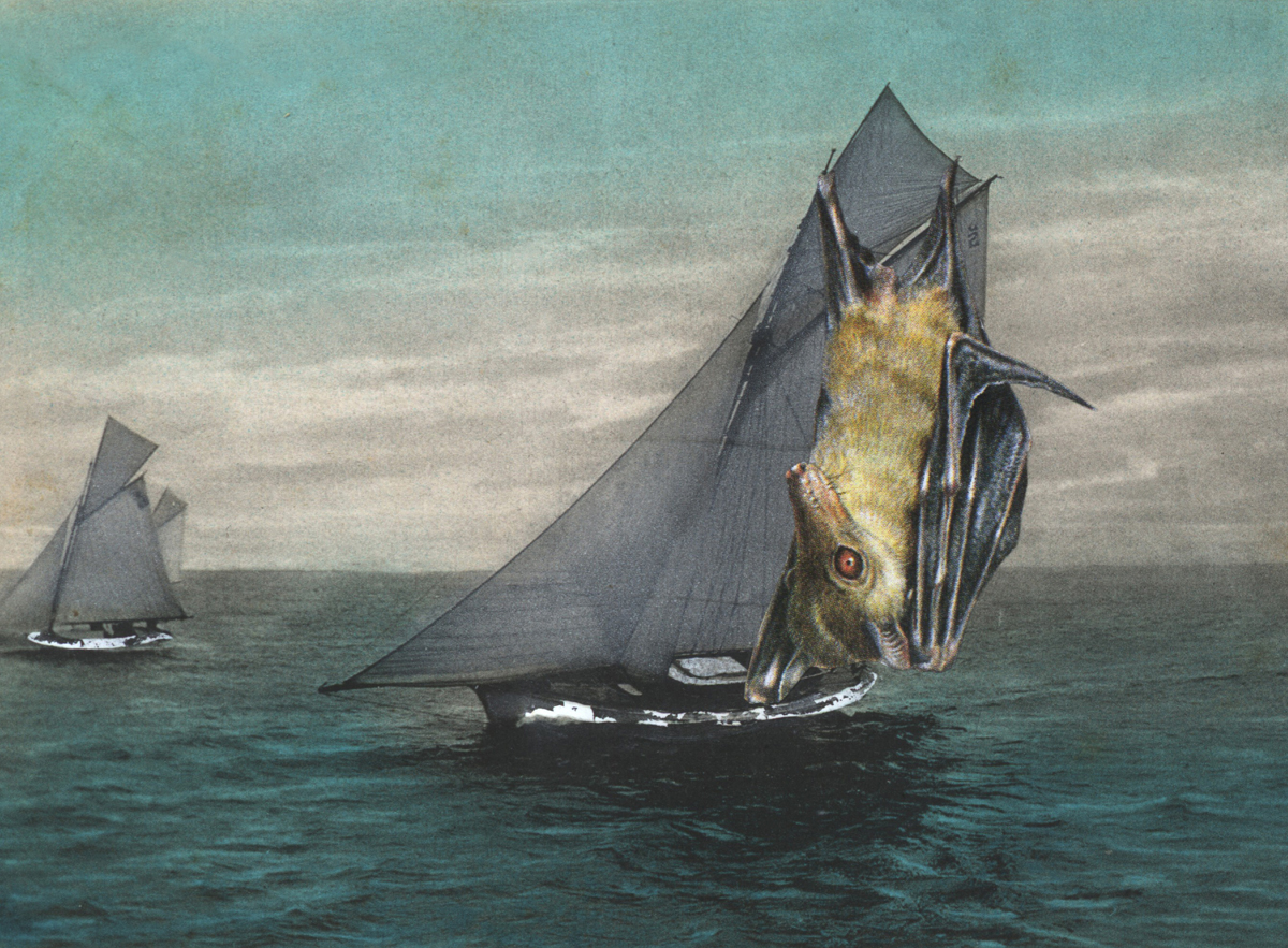 Gracia Haby,  It had to be said, when it came to yachting, the Dog bat provided sails like no other , 2013, postcard collage (cropped)