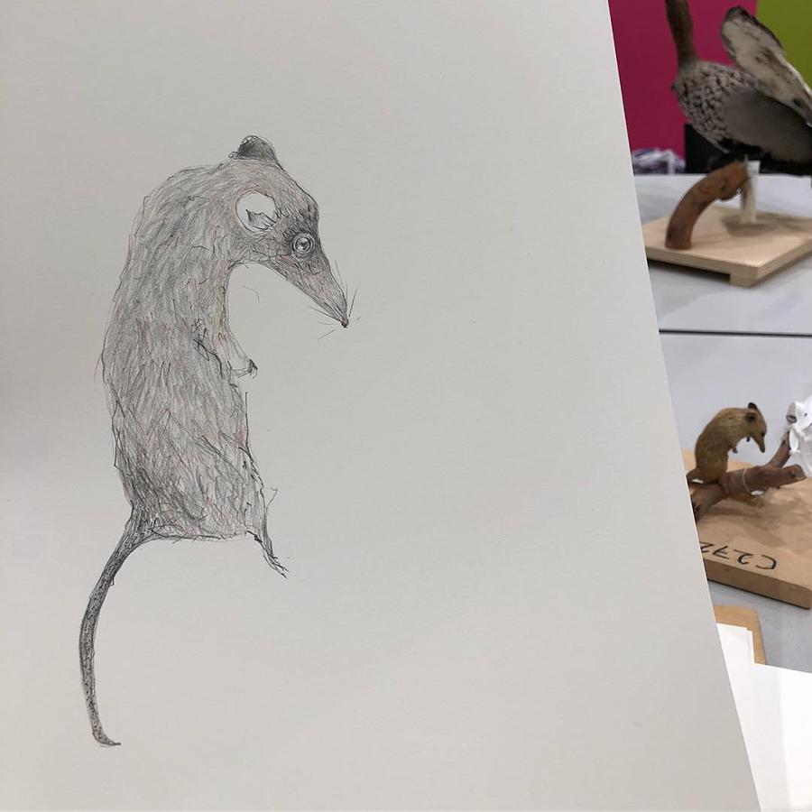 gracia haby_Honey Possum_03.jpg