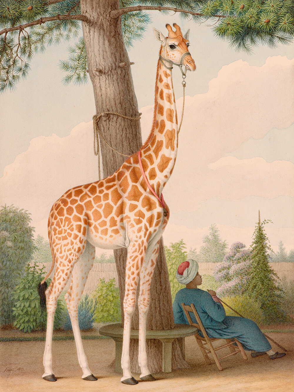 Study of the Giraffe Given to Charles X by the Viceroy of Egypt , Nicolas Huet II, 1827