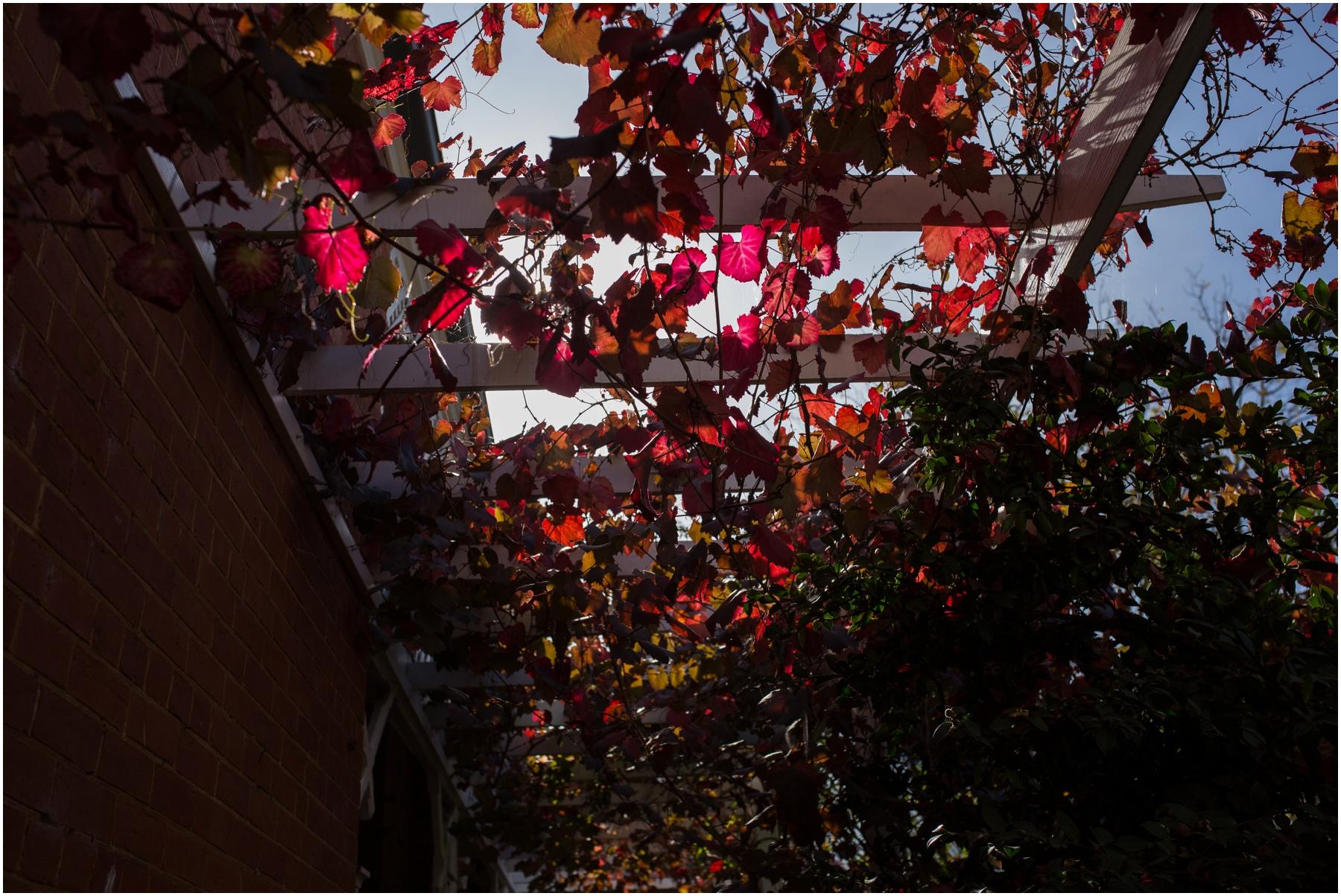 shepparton-photographer_0131.jpg