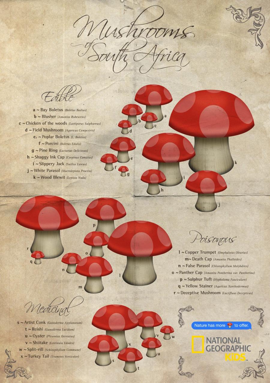 NGK-Emoji---Mushrooms.jpg